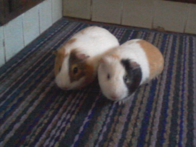 Puck e Oberon