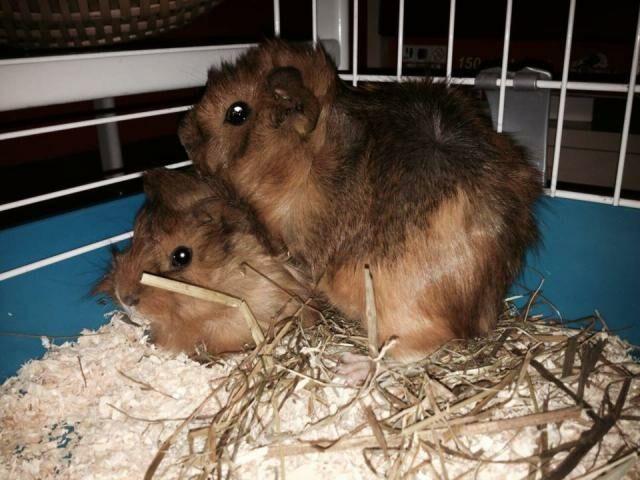 Ambra e Cloe