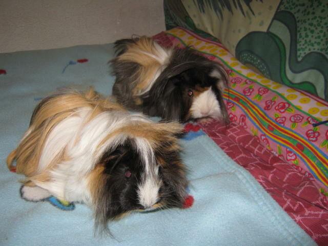 Stewie e Rufus